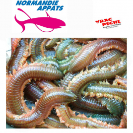 Boite Jumbo Rouges  normandie appats