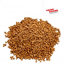 Jaune de hollande baby corn 1 kg vracpeche
